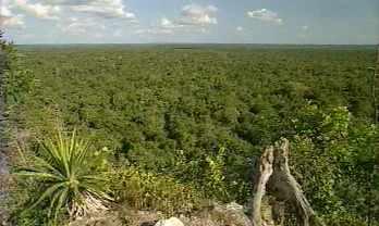 Un petit bout de forêt